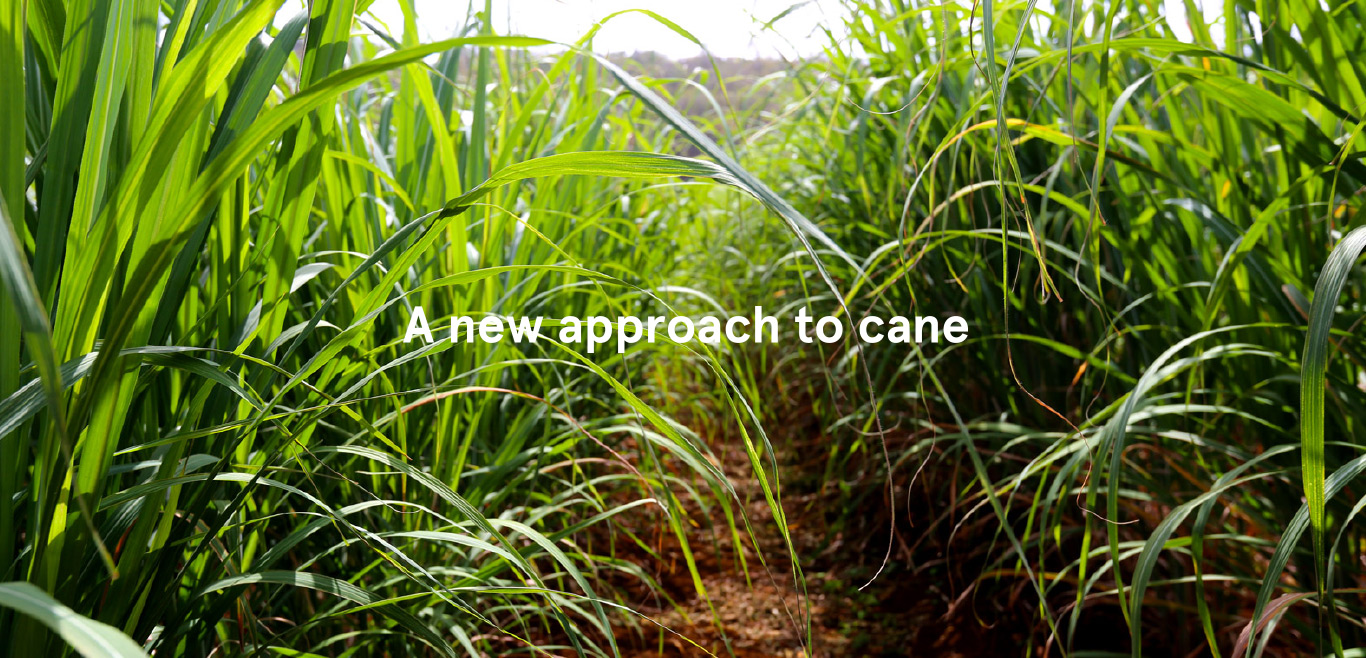 CaneCo, grenada, caribbean, propogate, cultivate, farm, superior, sugar cane, superior sugar cane, harvests, premium, booker tate, cane growing, terroirs, leading cane experts, renegade rum, renegade rum distillery, St George's Grenada, agricultural services, cane juice, distillation, grenadian business, provenance, microclimate and soil, maran facility, farmers and landowners, seed cane, Mark Reynier, distiller, Bertrand John, director of agriculture, Graham Williams, director, Isaac Charles, nurseryman, Valma Jessamy, environmental consultant, Duncan Butler, agronomist, sugar cane varieties, distillery and mill, Pearl Grenada, oak barrels, we're looking for good land good people, want to farm?, own 5+ acres?, cane supply agreement, land lease, management contract, get involved