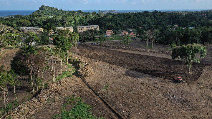 clearing land for a sugar cane farm